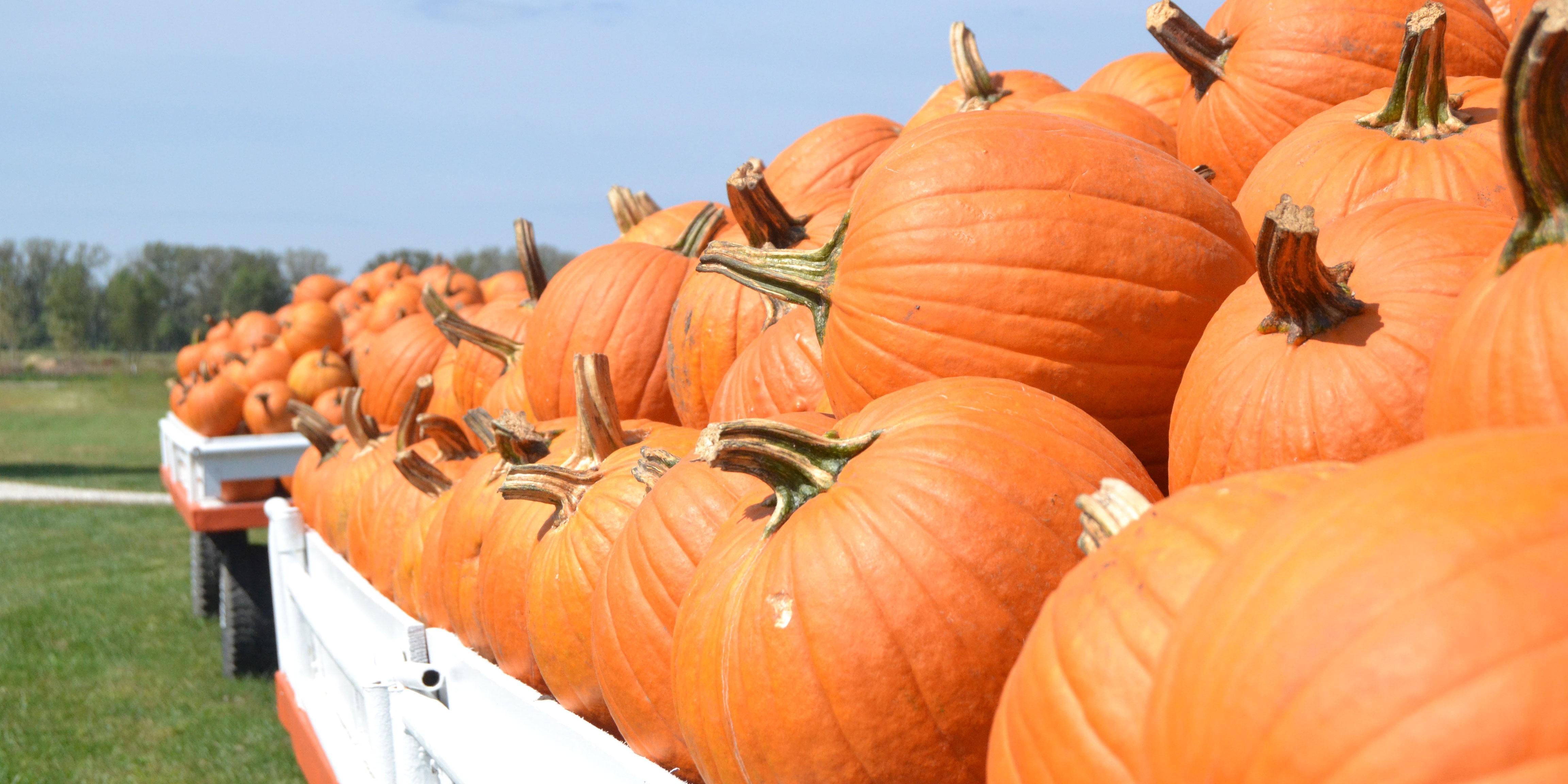 9-23-15,Gammon,PumpkinPatch
